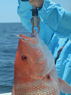 16redsnapper 225x300 The Future of Fishing As We Know It
