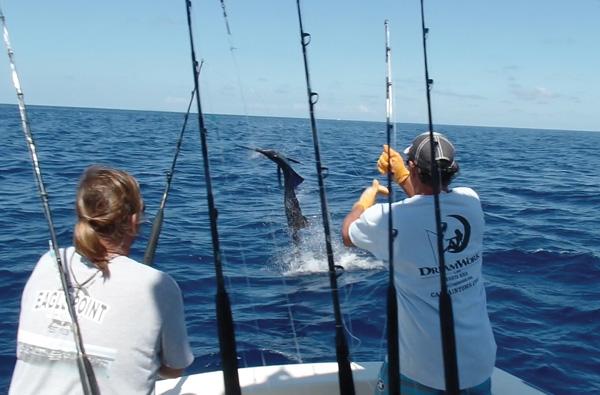 costa rica sailfish Galveston Bay Spring Fishing