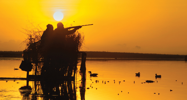 duckhunting Duck Numbers Strong but Local Habitat Conditions Questionable