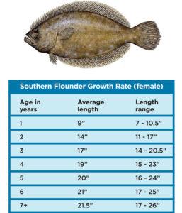 floundergrowthchart