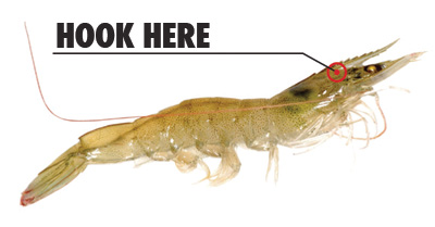 liveshrimphook Saltwater Fishing Tips for Summertime Visitors
