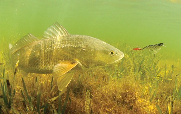 Lure Colors for Trout and Redfish - Gulf Coast Mariner Magazine