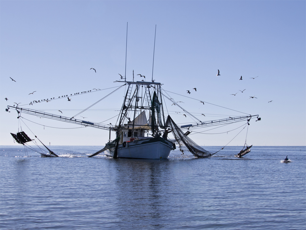 Commercial shrimp boats for sale gulf coast autos post for Commercial fishing boats for sale gulf coast