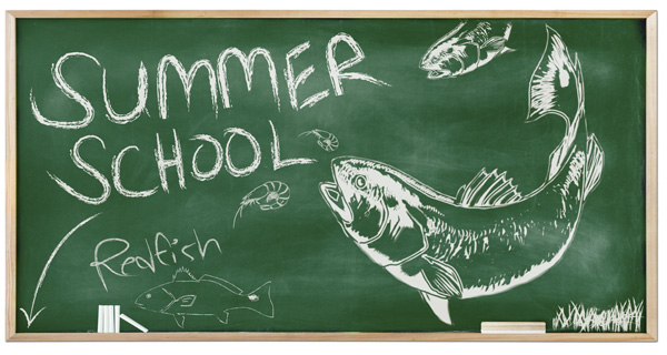 summerschool Summer School: Schooling Redfish in the Marsh