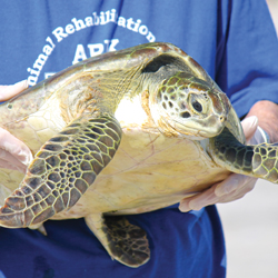 turtletime Sea Turtles Released Back into Gulf