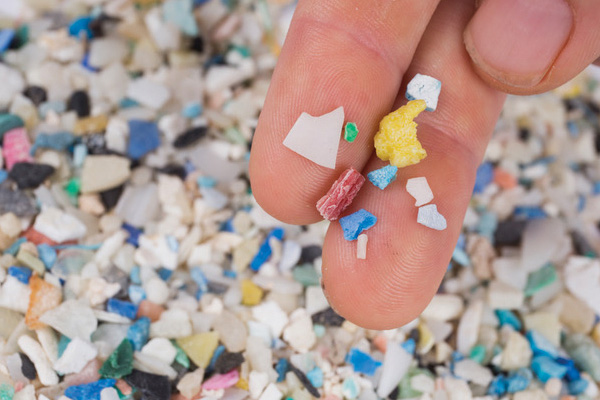 plastic shard Plastic in Paradise Part II: Microplastics