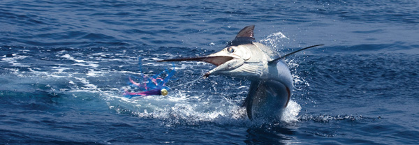 bmarlinjump Texas Billfish Classic returns to Freeport Aug. 1 4