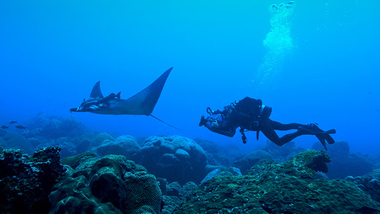 unnamed Sanctuary Identified as Manta Nursery