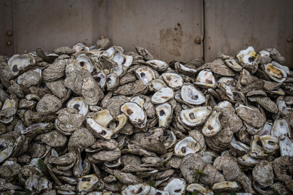 harvey oyster galveston Galveston Bay oysters continue to recover one year after Hurricane Harvey