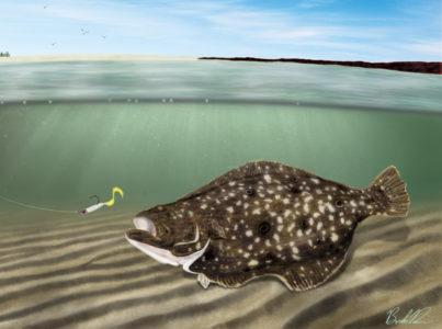 flounderrowan 403x300 Galveston Flounder Run: A Quick Guide